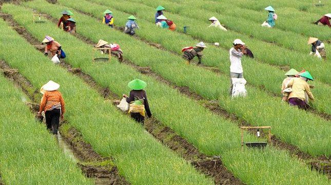 Peranan Penyuluh Pertanian Bagi Para Petani